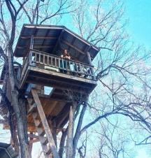 Photo by B. Swigart at Josh's Tree House